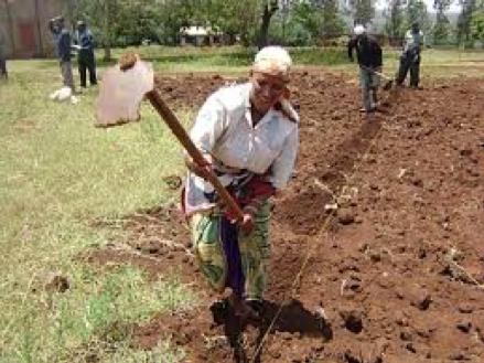 Zambia Youth Land Project